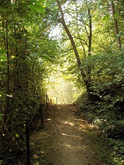 forest-path-397825__340